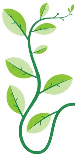 sustainability-leaf-285px-1